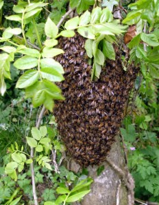 Swarm clustering on tree